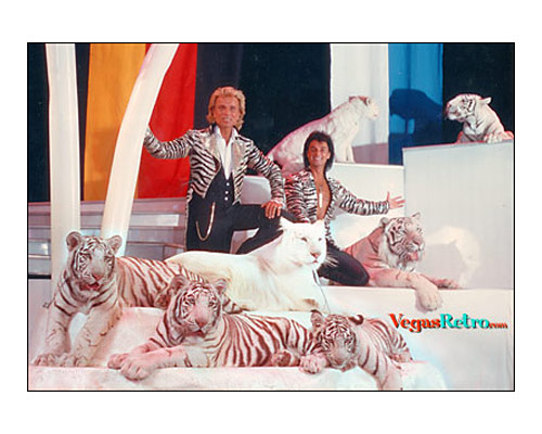 Image of Siegfried & Roy with 7 white tigers