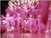 Zoomy Photo of showgirls and dancers in Las Vegas Production show